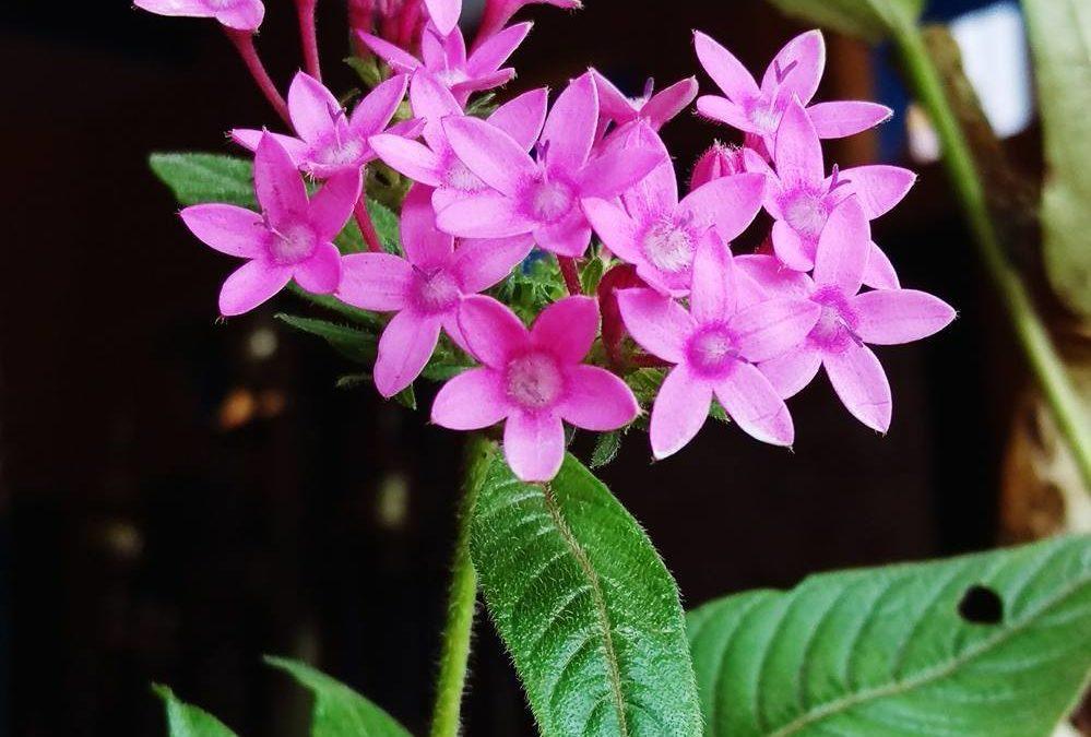 Plantas: Fechas clave para retirar la tuya